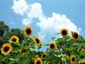 夏の花@京都府立植物園