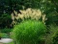 秋の報せ@京都府立植物園