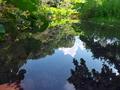 水面の夏空@京都府立植物園