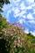 萩咲く空にひつじ雲@おにゅう峠