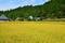山里の稲田@朽木針畑