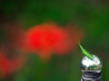 赤に向かって飛べ@京都府立植物園