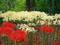 白と赤の彼岸花@京都府立植物園