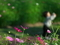 太陽に向かって@京都府立植物園