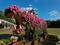 菊を纏ったカバ@京都府立植物園