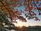 桜も色づいて@高野川