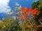 秋の八丁平
