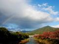 染まる桜並木と虹