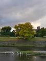 サギが憩う秋の鴨川