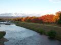 西日に色づく秋の木々@鴨川