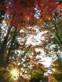 紅葉の森に落ちる日@赤山禅院