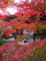 赤山禅院の彩り