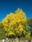 銀杏の木の下で@京都府立植物園