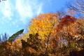 おにゅう峠の紅葉