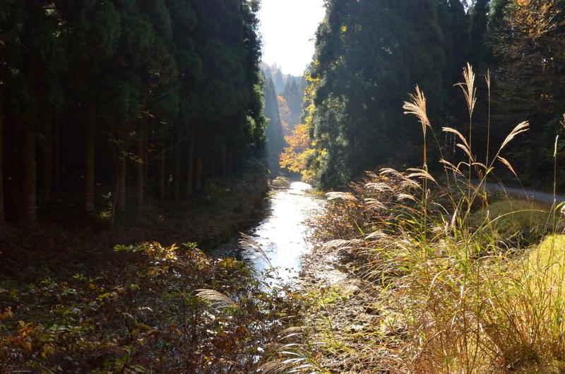 秋の山河@朽木小入谷
