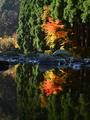 秋の針畑川