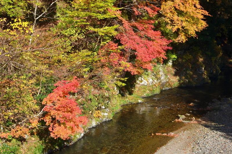 秋の久多川
