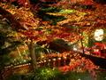 紅葉夜景@貴船神社