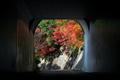 トンネルの先の紅葉@清滝