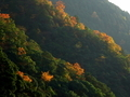 保津峡の紅葉
