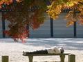 秋のお昼寝@京都御苑