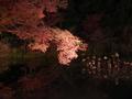 紅葉ライトアップ@京都府立植物園