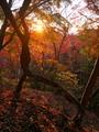 秋の瓜生山