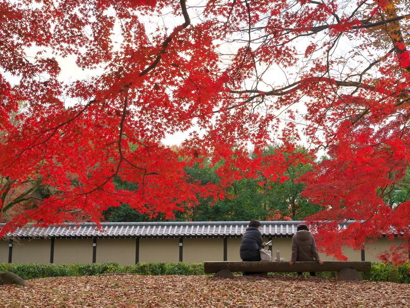 紅葉の下で@京都御苑