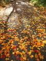 散り紅葉@鷺森神社