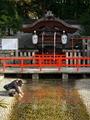 水占い@下鴨神社御手洗池