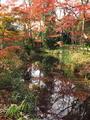 糺の森@下鴨神社