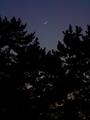 京都御苑で月