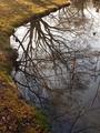 冬の池@京都府立植物園