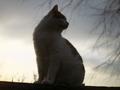 見返り猫@哲学の道