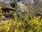 レンギョウ咲く宗像神社@京都御苑