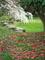 散り椿と枝垂れ桜@京都御苑