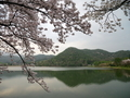 桜咲く広沢池