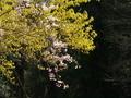 花の競演@曼殊院近傍
