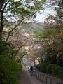 三重塔を望む@宗忠神社