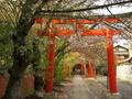 竹中稲荷神社の桜