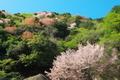 山の春@比叡山系