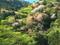 彩られた山の春@比叡山系