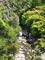 藤咲く清滝の流れ