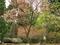 愛宕神社境内に咲く桜