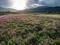 北嵯峨のレンゲ畑