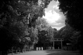 祭りの前@下鴨神社(赤外線)