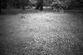 京都御苑の草原(赤外線)