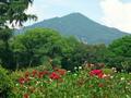 バラと比叡山@京都府立植物園