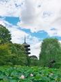 東寺の蓮と五重塔