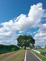 夏空のサイクリングロード@桂川
